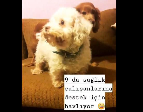 Lili köpekten sağlık çalışanlarına destek