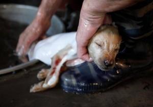 Çin'de köpek katliamı