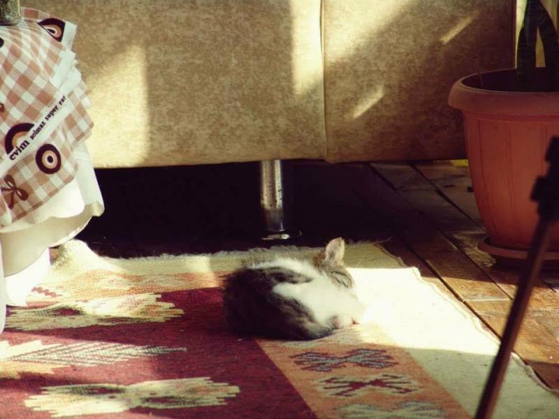 Kırpık Pet Pansiyon