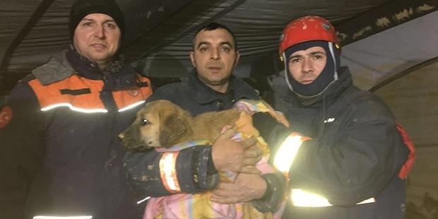 70 metrelik kuyudaki köpek 10 gün sonra kurtarıldı