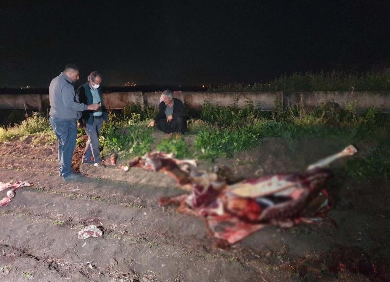 Adana'da, tarlada öldürülmüş 3 at bulundu