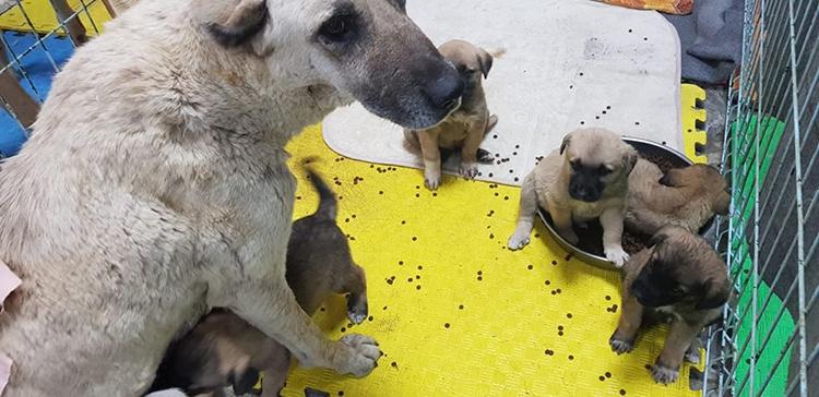 Adıyaman'da tüfekle vurulan köpek ve bebekleri tedaviye alındı