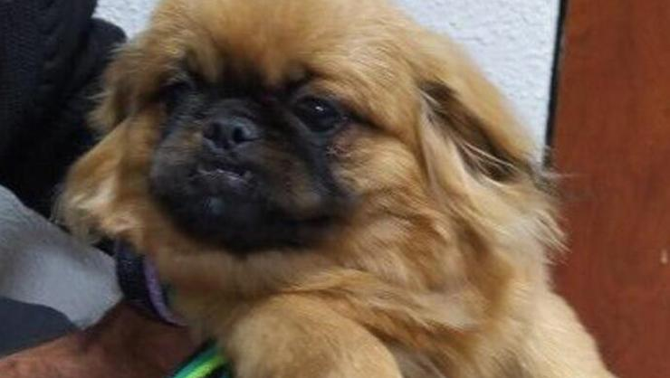 Ankara'da eve giren hırsız, köpeği ve güvercinleri çaldı