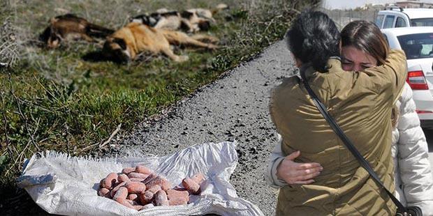 Ankara'da toplu hayvan katliamı sürüyor! 7 köpek daha katledilmiş halde bulundu