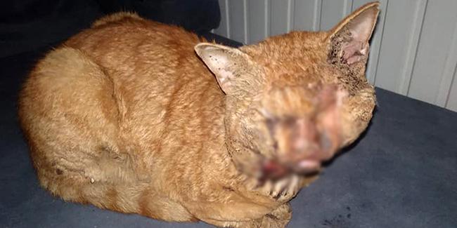 Antalya'da hayvana işkence: Naylonu eritip kedinin gözlerine damlattılar