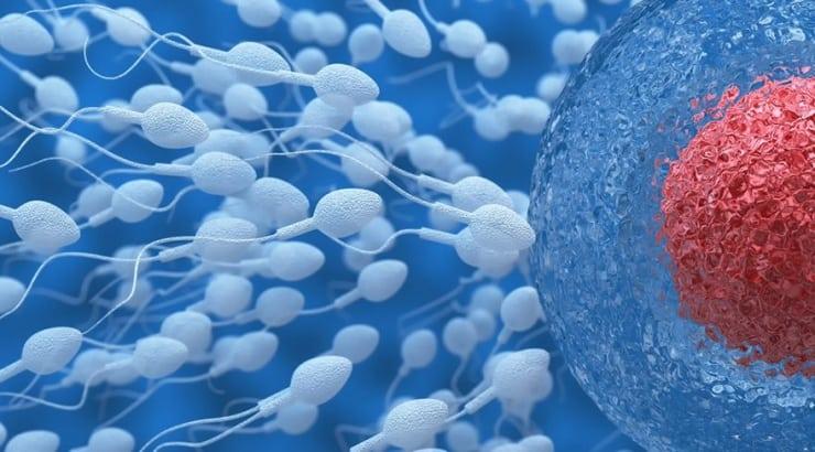 Araştırma: Spermler uzayda 200 yıla kadar dayanabiliyor