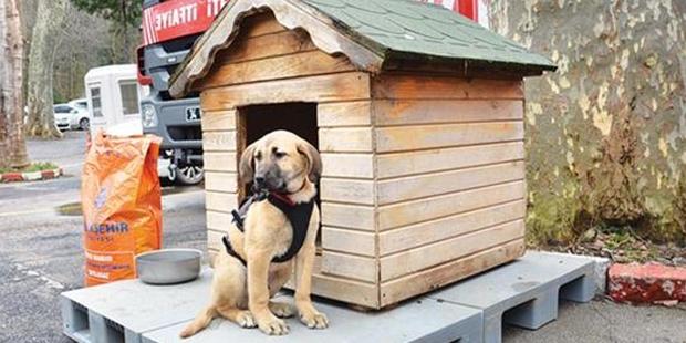 Arazinin sahibi: Sondaj kuyusu bize ait değil, ama köpek bizim!