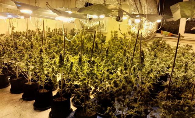 Avcılar'da çatı katında 1 milyon TL değerinde uyuşturucu ele geçirildi