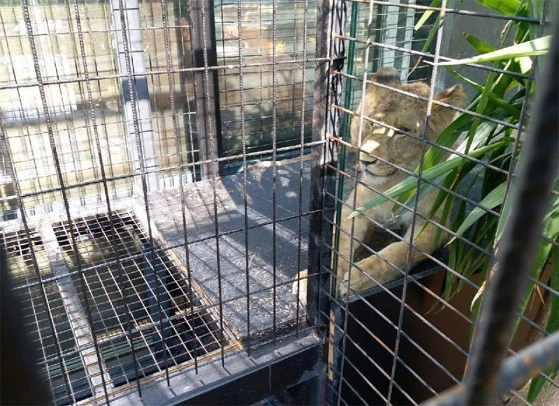 Bakanlık hapsedilen hayvanlar için 'izinleri var' dedi!