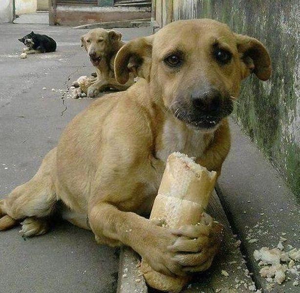 Başıboş DHA yine köpeklere saldırdı!