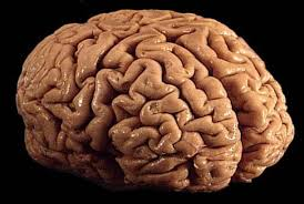 Beyin, 10 yıl nasıl gençleştirilebilir?