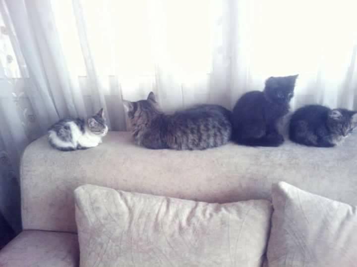 Beyoğlu'nda ev ortamında hayvan bakım oteli: Kırpık Pet Pansiyon