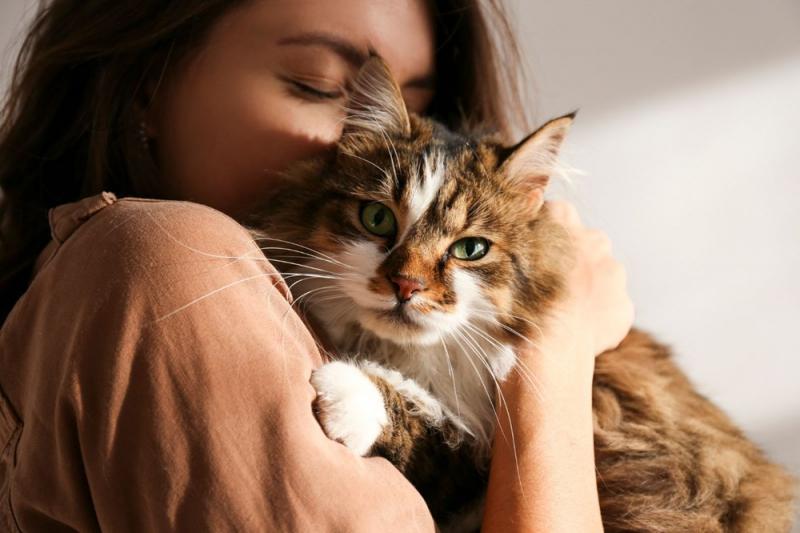 Bilim insanları, kedilerle insanlar arasındaki 5 ilişki türünü açıkladı