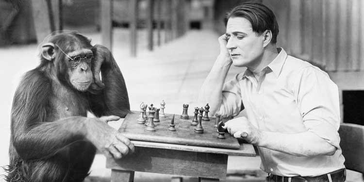Bilimfili açıkladı: İnsan maymundan geliyorsa, şimdiki maymunlar neden insan olmuyor?
