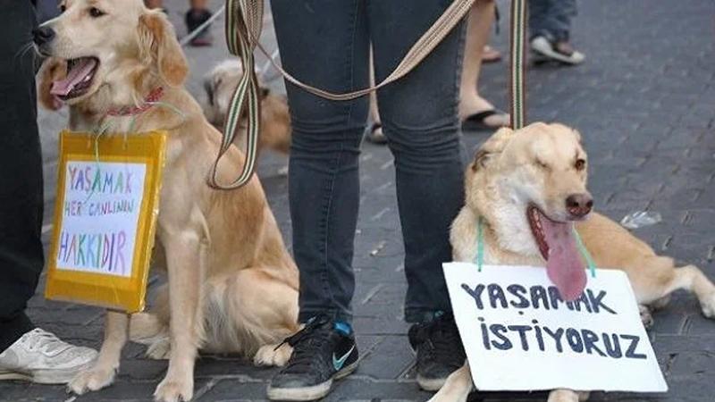 Çanakkale'de 16 köpeği öldüren 2 kişi serbest bırakıldı