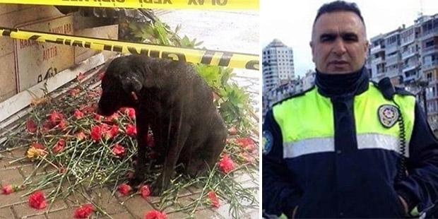 Çatışmada hayatını kaybeden Fethi Sekin'in baktığı köpeğin bakımı üstlenildi