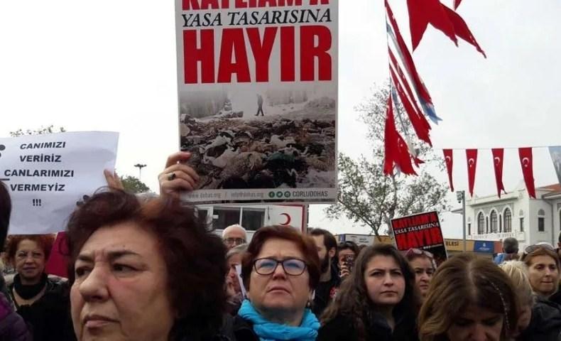 Çekmeköy'de bir anne kedi ve üç yavrusu bıçaklanarak öldürüldü