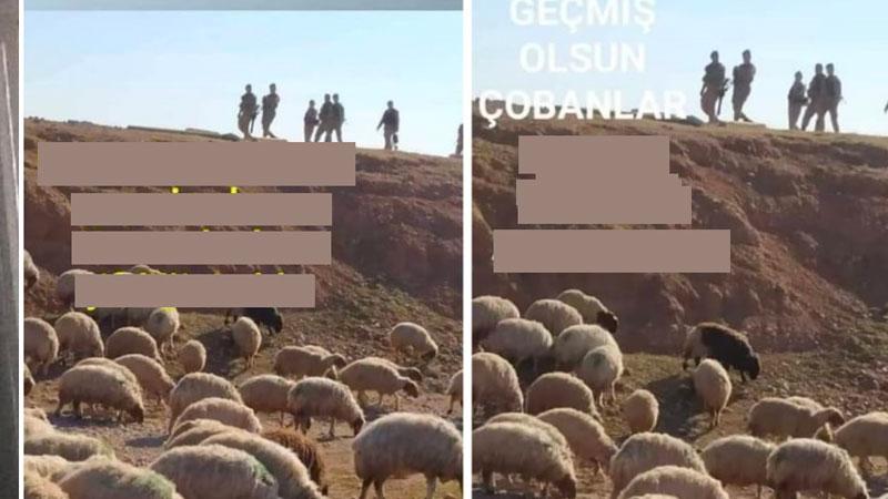 CHP'li Tanal: Jandarma Şanlıurfa'da koyunlara gözaltı işlemi uyguluyor, hayvan hakkı ihlali!