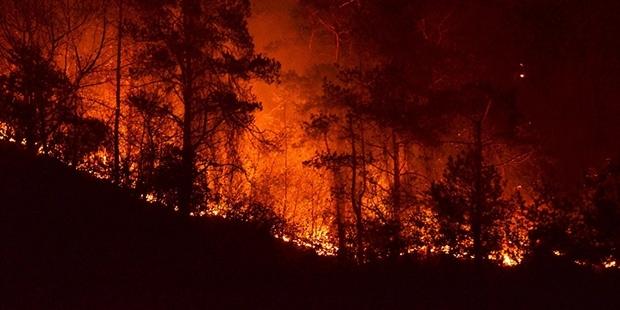 CHP'li vekil: Sürmene'de yanan orman, Erdoğan'ın Katar Emiri'ne havadan dolaşarak gösterdiği yer