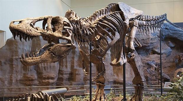 Dinozor iskeletleri 3 milyon avroya satıldı