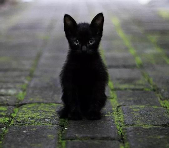 Edirne'de 3 kedi öldürüldü, 1 kedinin hayati tehlikesi sürüyor