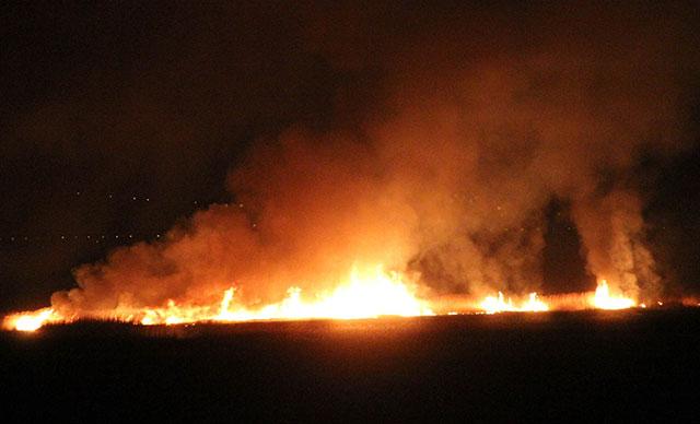 Erzincan'da 'kuş cenneti'nde yangın