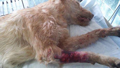 Gebze'de konteynerdaki köpek ölülerinin nedeni ortaya çıktı