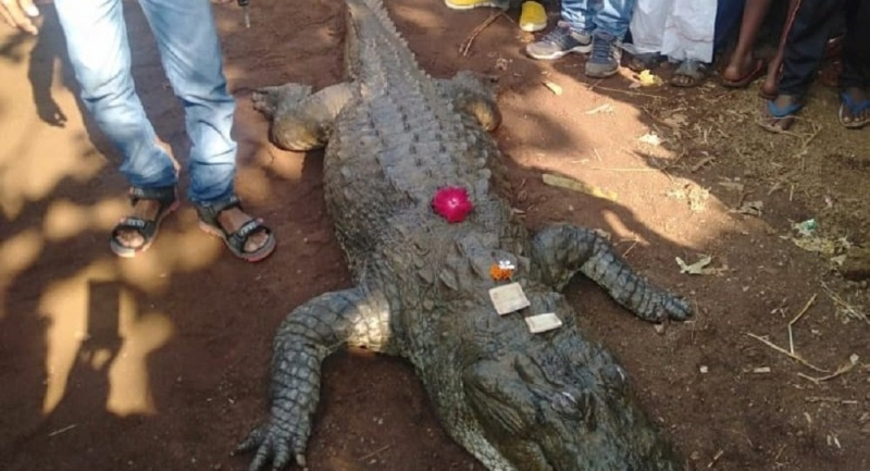 Hindistan'da timsahın cenazesine 500 kişi katıldı
