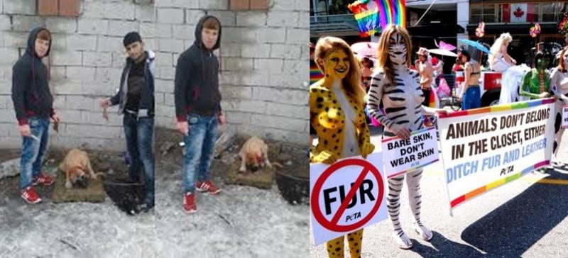 İngiliz hayvan hakları savunucusu: Kulakları kesilen yavru köpeği İngiltere'ye istiyoruz, yardımcı olun!