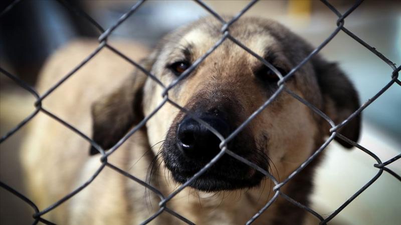 İran'da başkent Tahran'dan sonra bir şehirde daha köpek gezdirmek yasaklandı