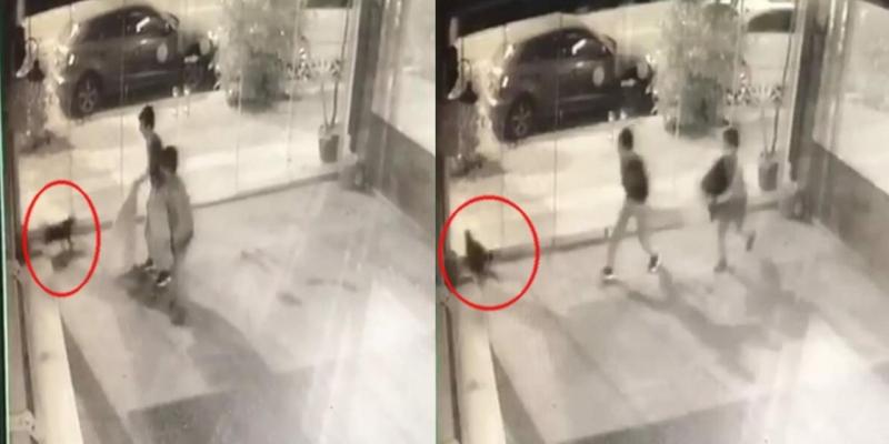 İzmir'de 2 çocuk, kediyi bayılana kadar tekmeledi!