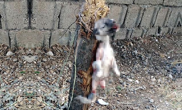 Kahramanmaraş'ta yavru köpeğin ayaklarını kesip, ağaca astılar!