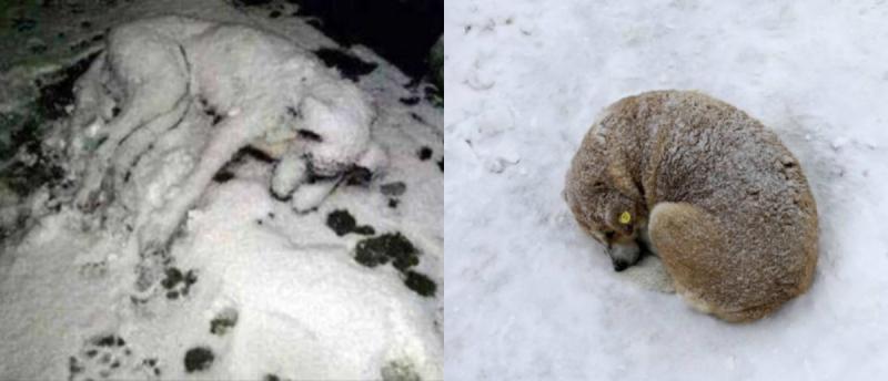 Kar kalınlığı 50 cm'ye ulaştı!
