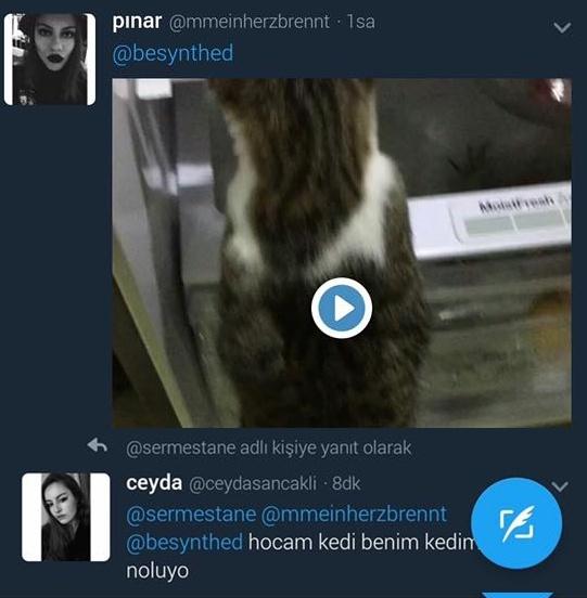 Kediyi buzdolabına kapayıp 'Türkiye'de kedinin değeri eşyadır'' yazdı!