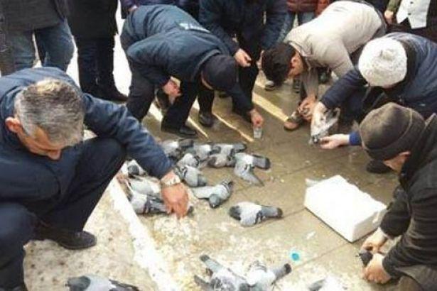 Kırıkkale'de güvercinleri zehirleyen kişi bulundu!