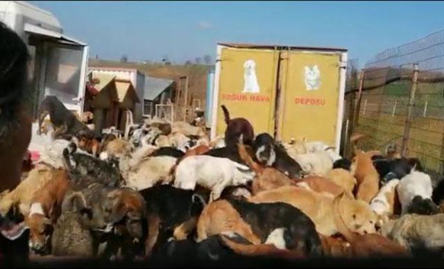 Kocaeli'de uygunsuz koşullarda 250 köpeğin bulunduğu barınak mühürlendi