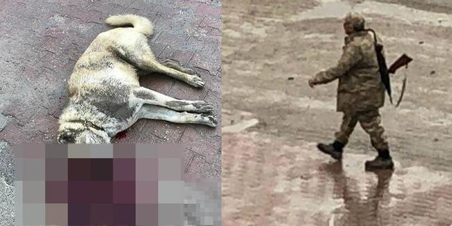 Köpeği tüfekle vurup öldürdü