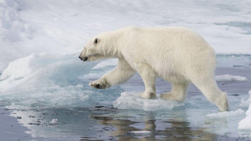 Küresel ısınma nedir, iklim değişikliğine dair göstergeler neler?