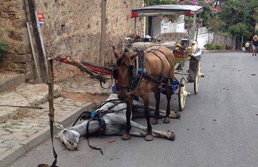 Kuşadası'nda atlara işkence sona erdi! Faytonlar kaldırıldı