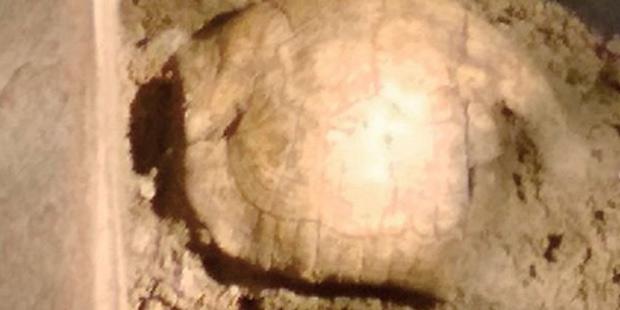 Mezardan 2 bin yıllık kaplumbağa kabuğu çıktı