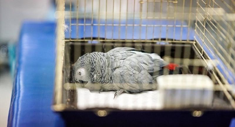Murat Özdemir'in eziyet ettiği papağan hayatını kaybetti