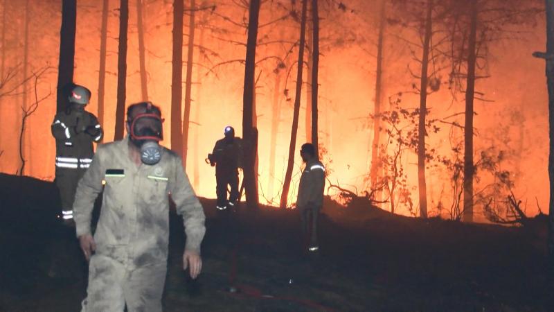 'Nedeni belirsiz orman yangınları oranı yüzde 47'ye yükseldi'