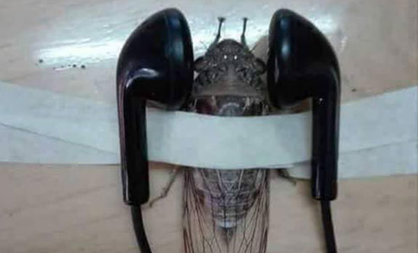 Öğretmenin hayvana işkence paylaşımı tepki gördü