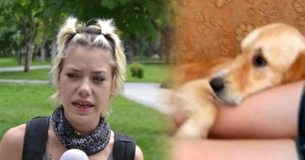 Otobüs firmasından öldürdükleri köpekle ilgili rezalet açıklama: Bir sürü asker ölüyor, bir köpek için ağlıyorsun
