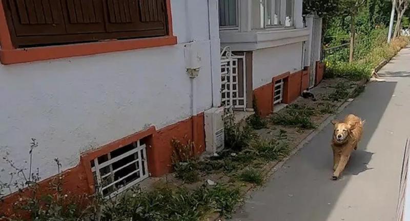 Rahatsızlanan sahibinin başından ayrılmadı, ambulansı hastaneye kadar takip etti
