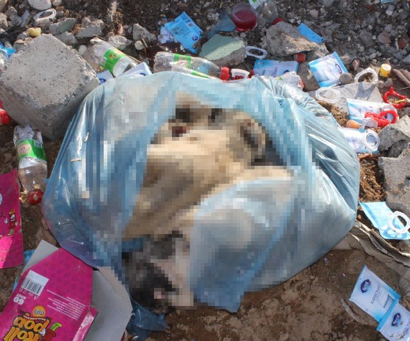 Şehir çöplüğünde poşet içerisinde yavru köpek ölüleri bulundu