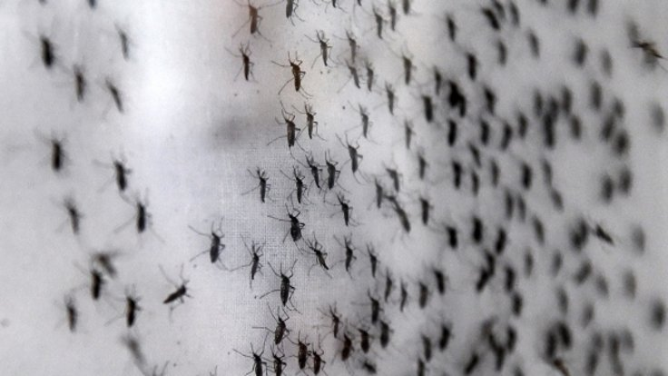 1 milyarın üstünde insan sivrisinekler yoluyla bulaşan hastalıklara maruz kalabilir