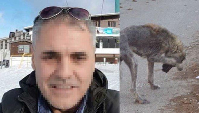 Sokakta yaşayan hayvanları tek tek öldüreceğini söyleyen belediye çalışanı görevden alındı