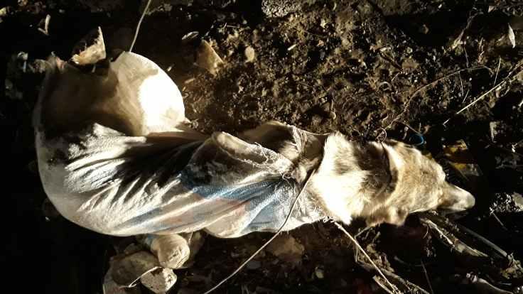 Van'da köpeği telle bağlayıp çöpe attılar