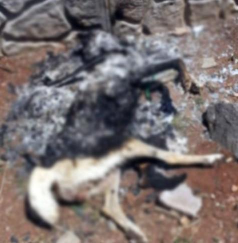 Yakılmış ve tecavüz edilmiş köpek ölüsü bulundu
